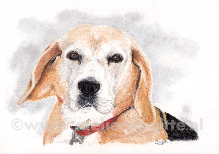 hond camille pastel A4