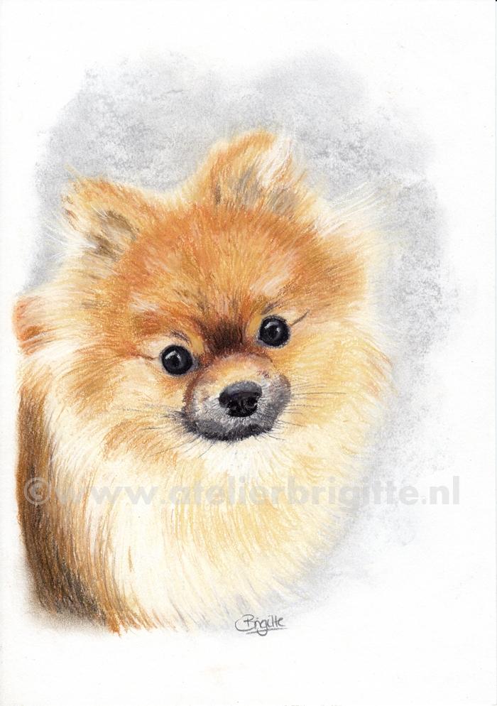 hond kenji pastel A4