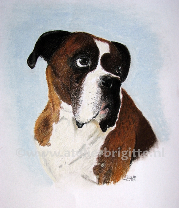 hond boxer woody pastel A3