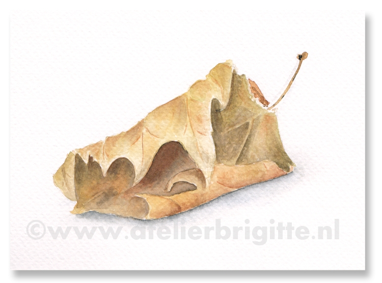 herfstblad autumn aquarel A4