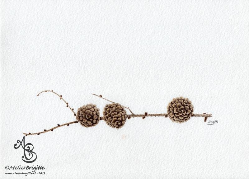 Denneappels | aquarel | A4 formaat
