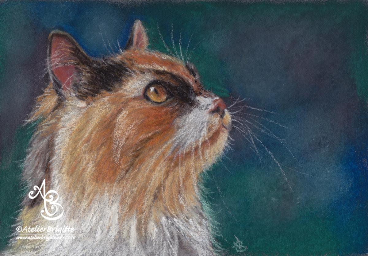 Portret Floesch | A5 | gedoneerd