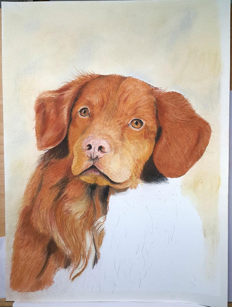 Dierenportret-pastel-hond