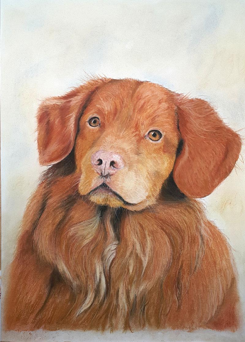 Portret-op-maat-pastel-huisdier